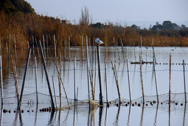 Albufera盐水湖在有河藤茎和捕鱼网的巴伦西亚 有盐水湖的自然公园  湖在西班牙 平安的安排 免版税库存图片