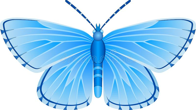 Albulina orbitulus blue butterfly vector image royalty free stock photography