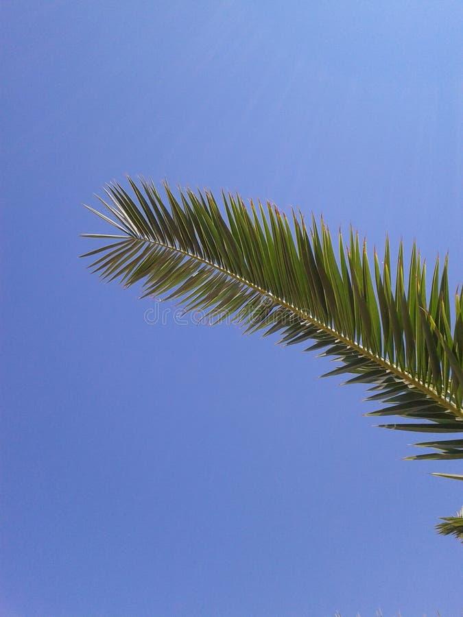 albumowy tła błękitny książki wizerunku liść palmy papieru fotografii tekstury drzewo zdjęcia stock