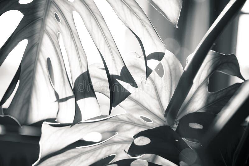 albumowy tła błękitny książki wizerunku liść palmy papieru fotografii tekstury drzewo obraz royalty free