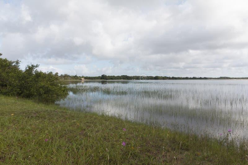 Alcaçuz laguna, Nizia Floresta, RN, Brazylia obrazy royalty free