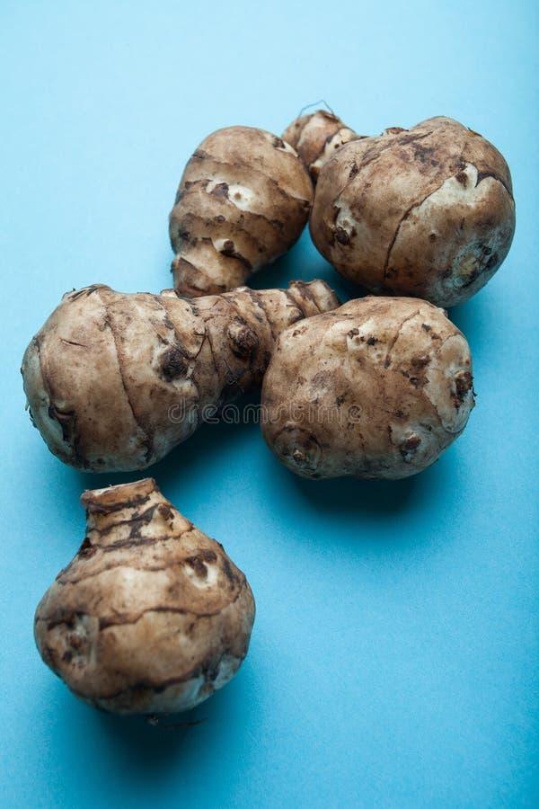Alcachofa de Jerusalén cruda orgánica comestible del topinambur, tuberosus del Helianthus, sunroot, sunchoke aislado en fondo azu imagenes de archivo