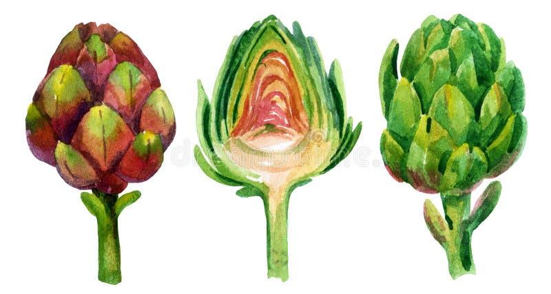Alcachofra da aquarela ilustração do vetor