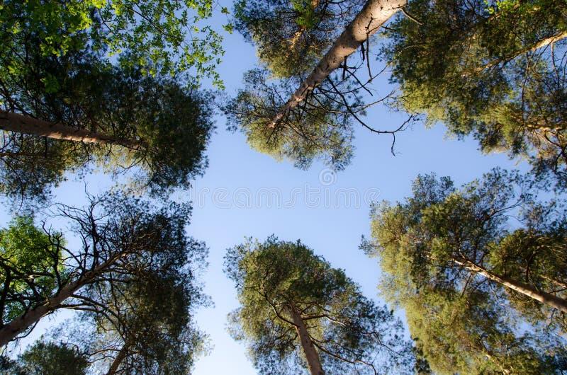 Alcance al cielo imagen de archivo