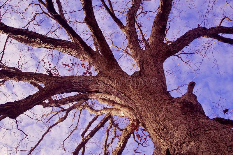 Alcance para el cielo imagen de archivo libre de regalías