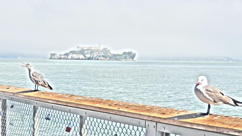 Alcatraz Σαν Φρανσίσκο Ασβέστιο στοκ εικόνες