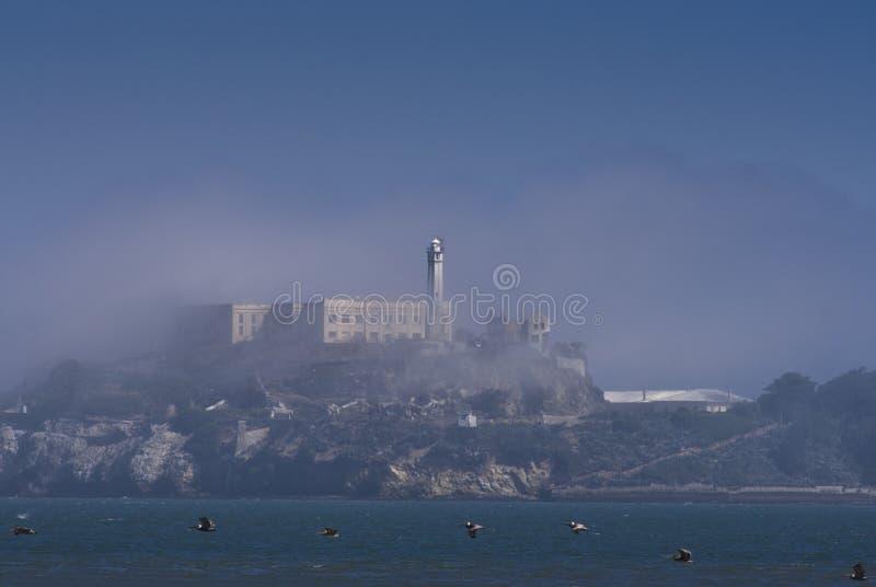 Alcatraz und Vögel lizenzfreie stockfotografie