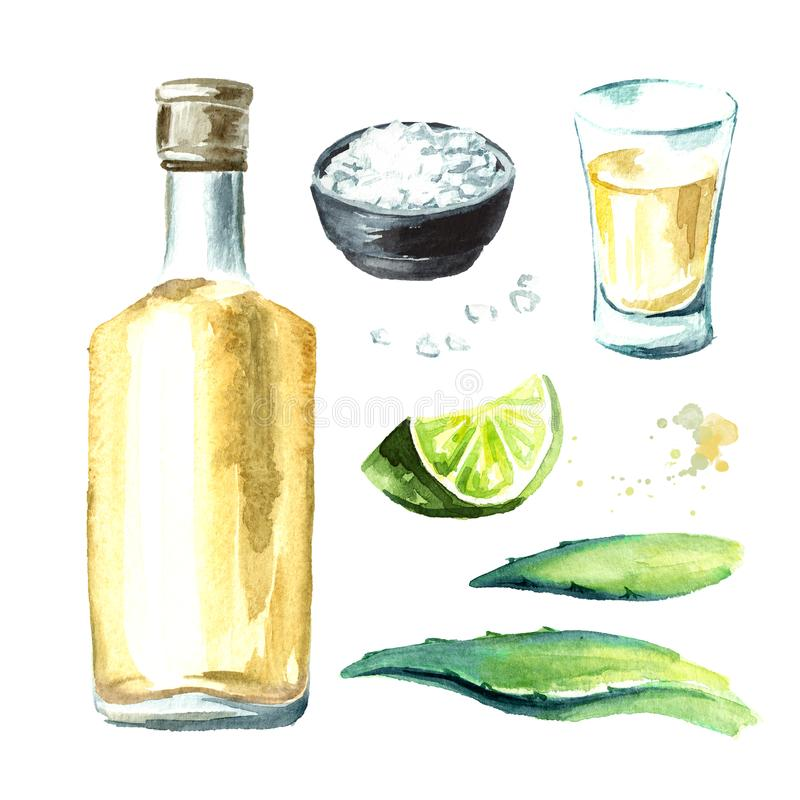Alcohol drink Tequila set, yellow bottle of mexican cactus booze, full shot glass with slice of lime and salt, agave leaves. Hand vector illustration