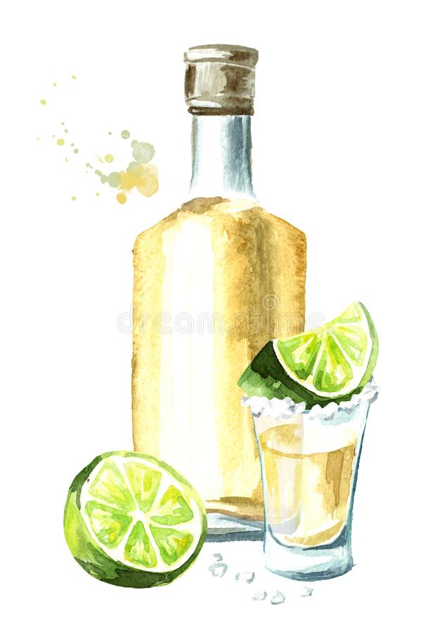 Alcohol drink Tequila, yellow bottle of mexican cactus booze, full shot glass with slice of lime and salt. Hand drawn watercolor v vector illustration