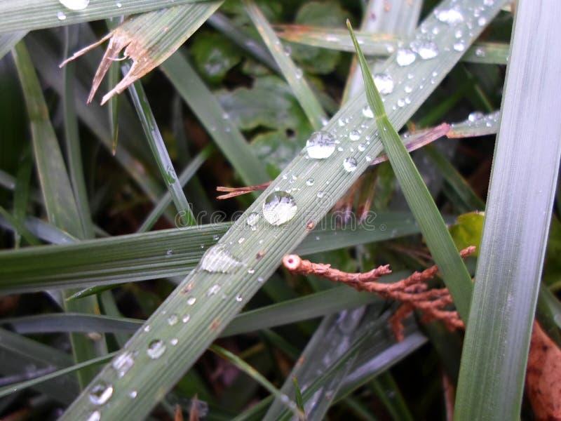 Alcune belle gocce di pioggia su una lancia immagini stock libere da diritti
