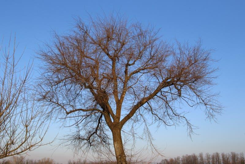 Alcune piante conservano il loro incanto anche nell'inverno fotografie stock libere da diritti