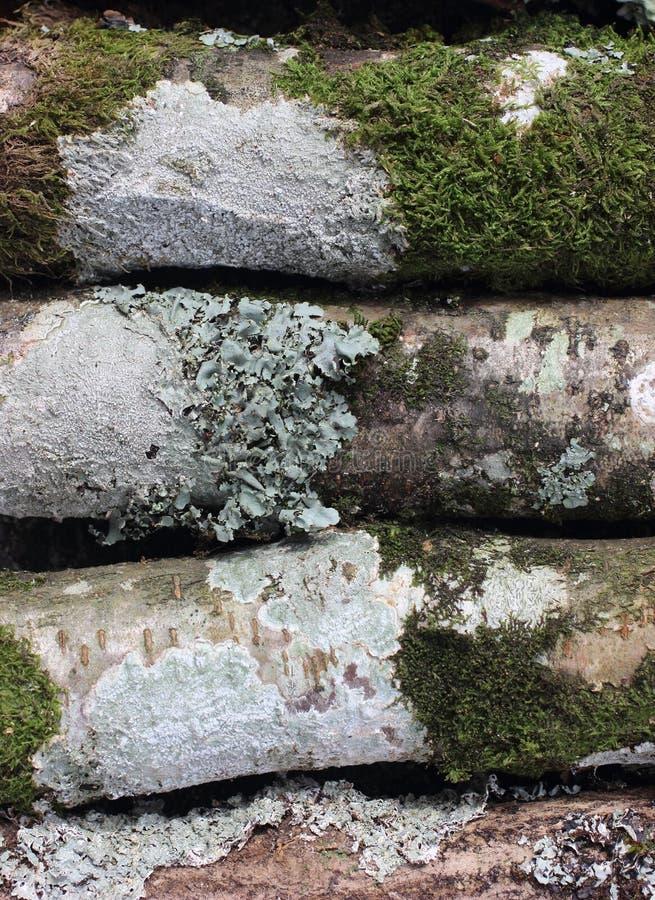 Alcune strutture del terreno boscoso fotografie stock libere da diritti