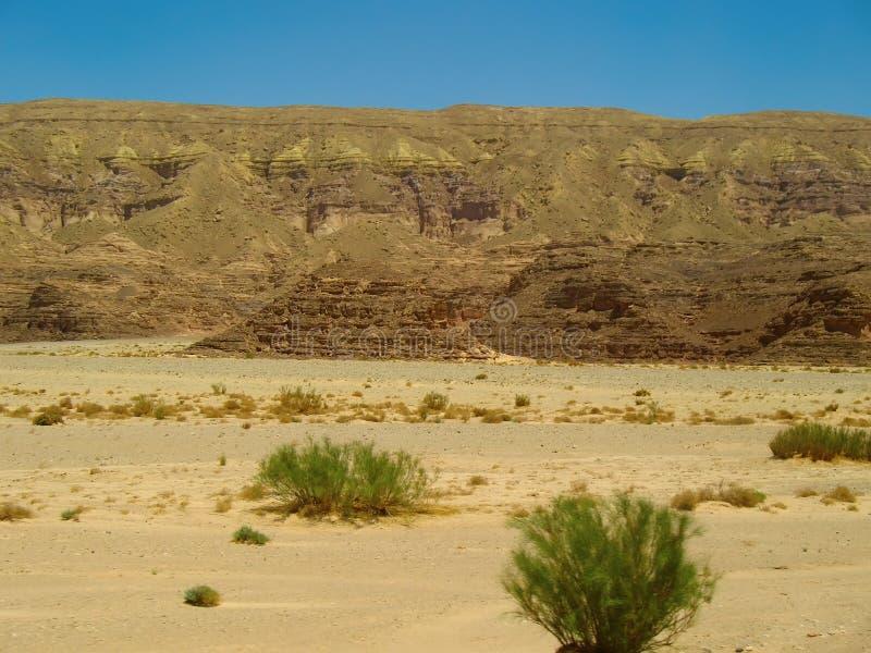 Alcuni cespugli nel deserto immagine stock