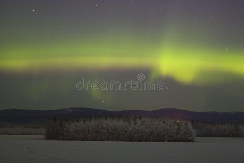 Qualche aurora boreale di colore sopra la foresta congelata immagine stock libera da diritti