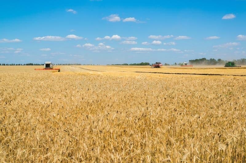 alcuni combinano il raccolto di grano dei raccolti nel campo, Russia fotografie stock