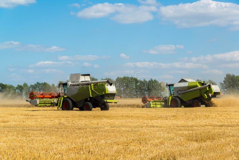 alcuni combinano il raccolto di grano dei raccolti nel campo, Russia immagine stock