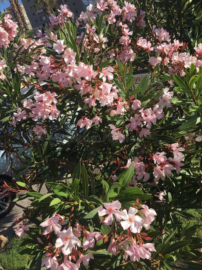 Alcuni fiori fotografia stock