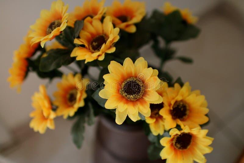 Alcuni fiori gialli in un vaso immagini stock