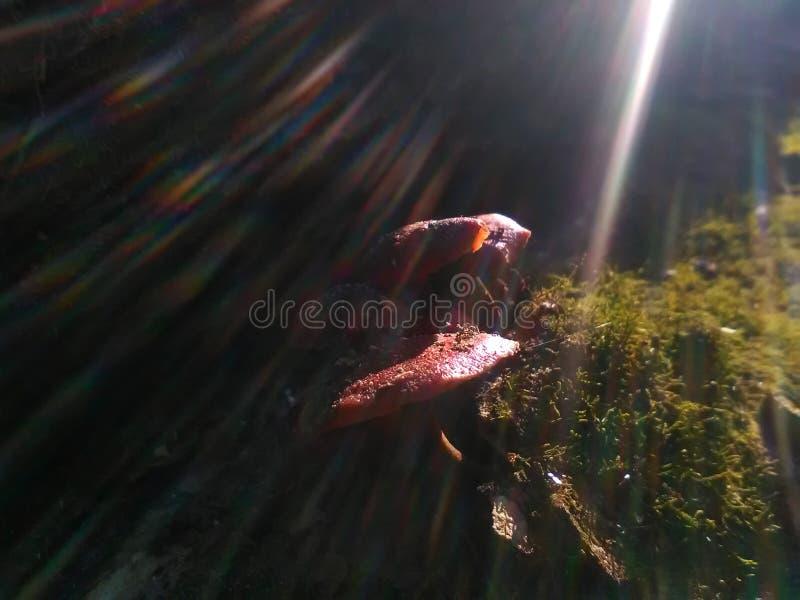 Alcuni funghi con gli effetti variopinti del sole fotografia stock libera da diritti