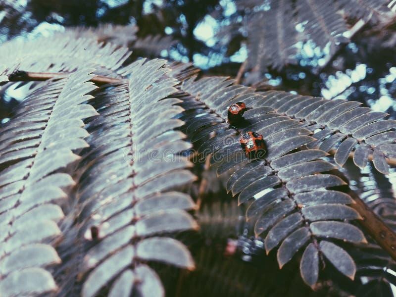 Alcuni insetti fotografia stock