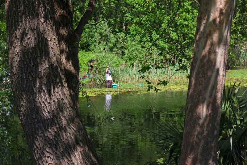 Alcuni pescatori, immersi nelle acque calme di un lago, sono dedi fotografie stock
