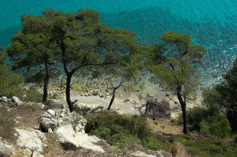 Alcuni pini si avvicinano al mare fotografia stock libera da diritti