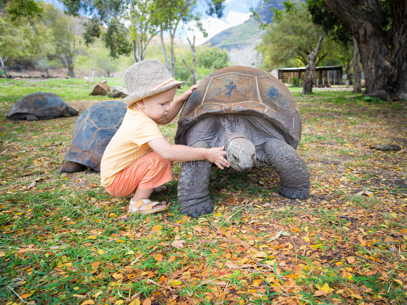 Aldabra giant tortoise and child royalty free stock images