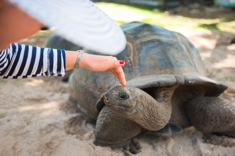 Aldabran Seychelles gigantyczny tortoise fotografia stock