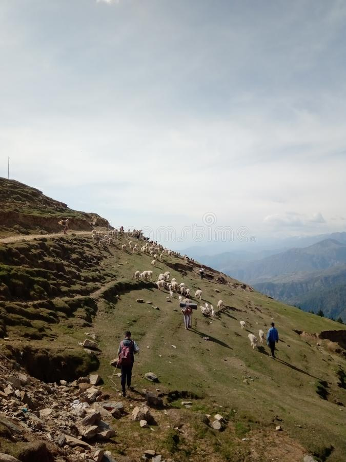 Aldeões indianos e seu carneiro na área montanhosa imagens de stock royalty free