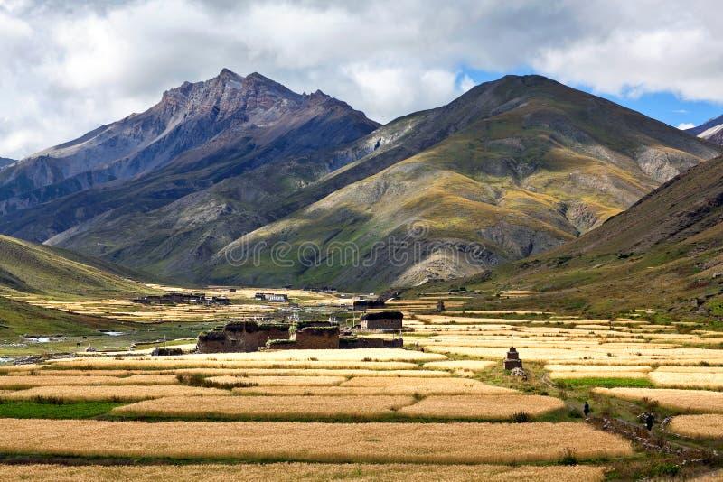 Aldea en Dolpo, Nepal de Dho Tarap fotografía de archivo libre de regalías