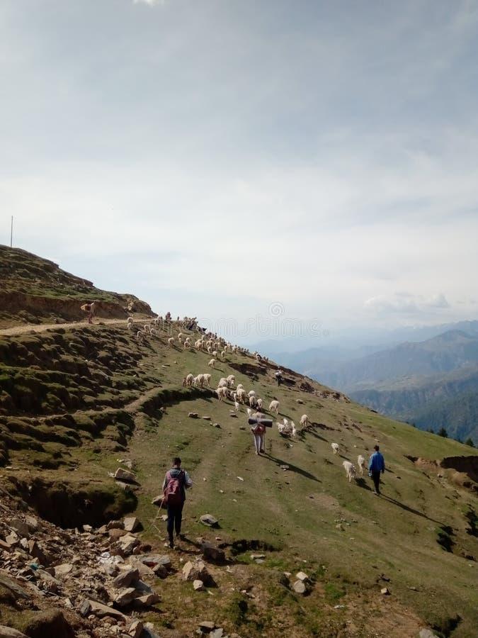 Aldeanos indios y su oveja en el área montañosa imágenes de archivo libres de regalías