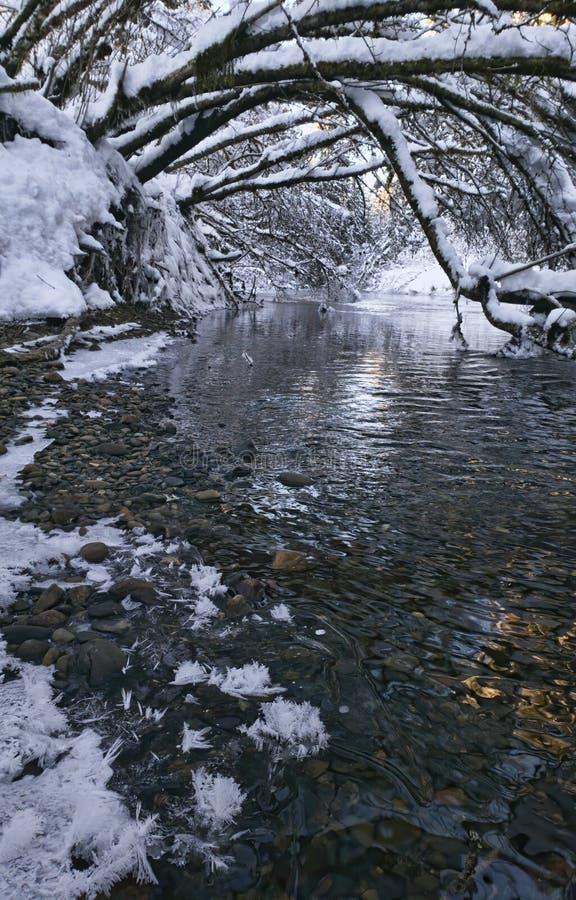 Alder bebouwt over een rivier in de winter stock afbeeldingen