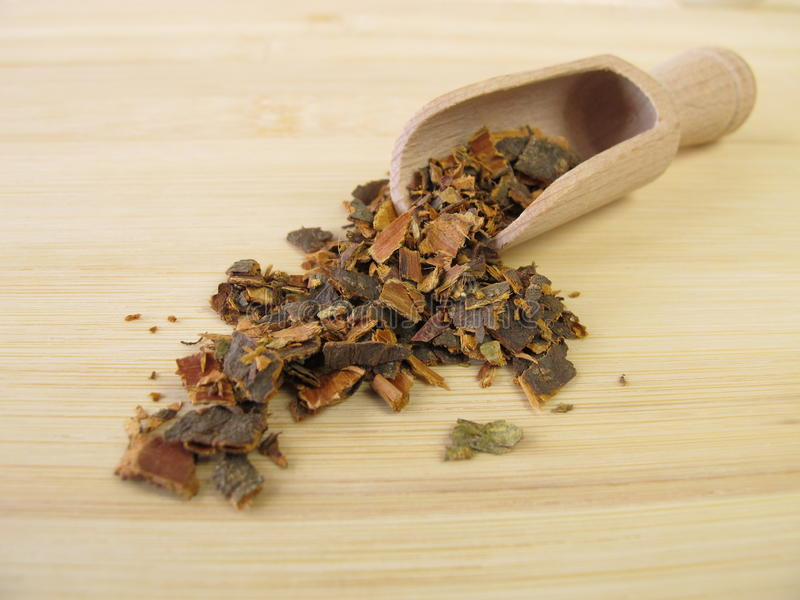 Alder Buckthorn bark, Frangulae cortex. In herbalism stock image