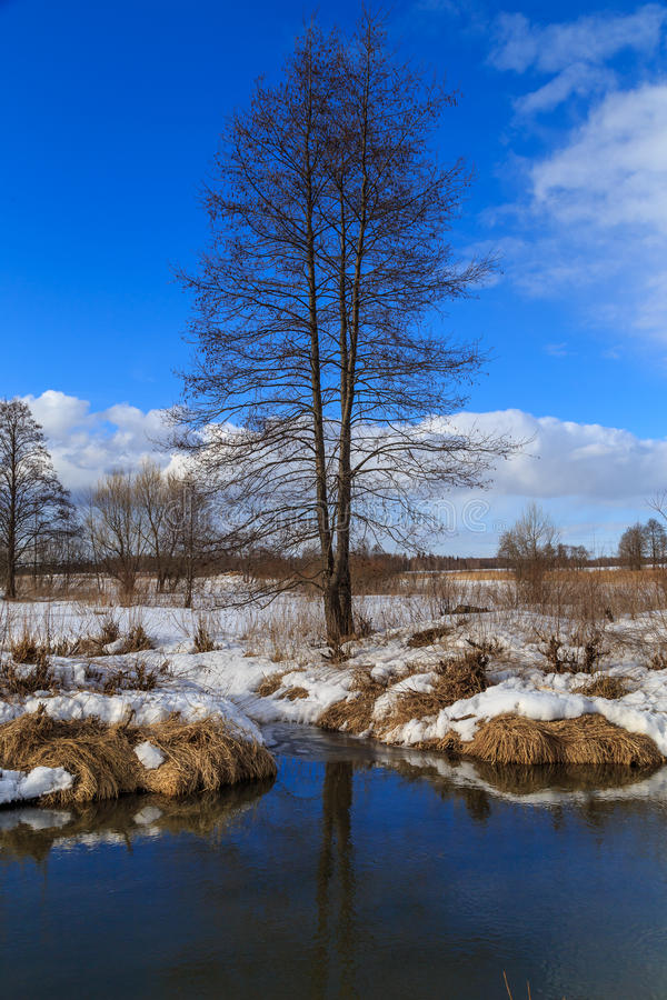 Alder riverside winter day. Blue sky stock photo