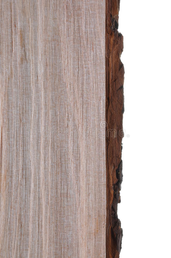 Alder tree bark and trunk. The structure of alder tree bark and trunk royalty free stock photography