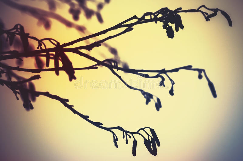 Alder tree branches, colorful vintage. Tonal correction photo filter effect royalty free stock photos