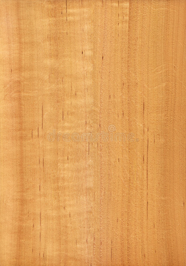 Alder (wood texture). Texture of alder (high-detailed wood texture series royalty free stock photos