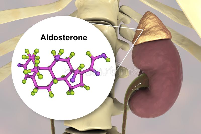 Aldosterone hormone produced by adrenal gland. Aldosterone hormone, mineralocorticoid hormone produced by adrenals, 3D illustration vector illustration