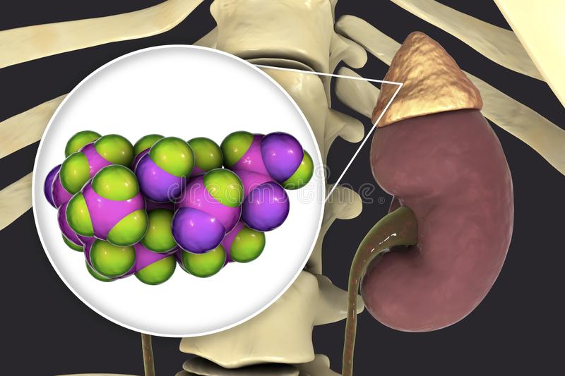 Aldosterone hormone produced by adrenal gland. Aldosterone hormone, mineralocorticoid hormone produced by adrenals, 3D illustration royalty free illustration