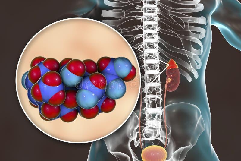 Aldosterone hormone produced by adrenal gland. Aldosterone hormone, mineralocorticoid hormone produced by adrenals, 3D illustration stock illustration