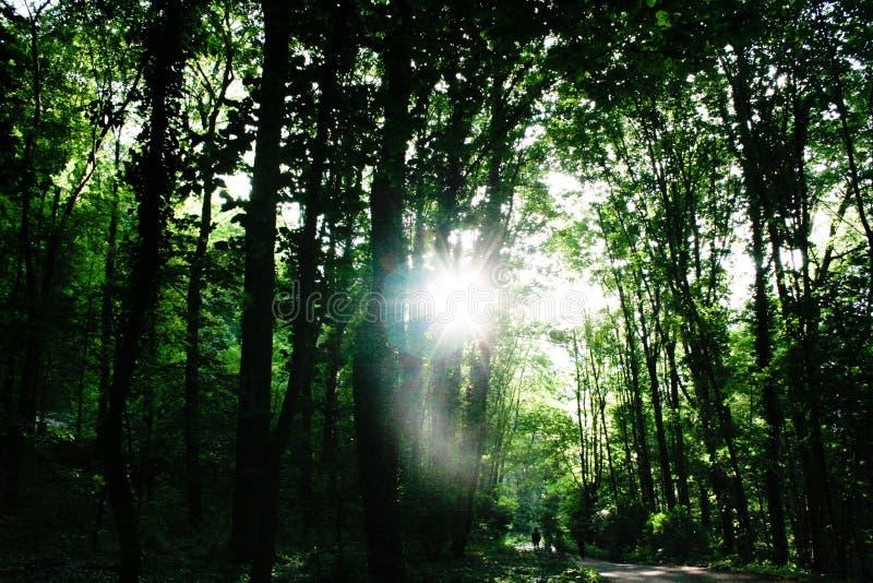 Ale słońce błyszczy dobrze przez drzew zdjęcie stock