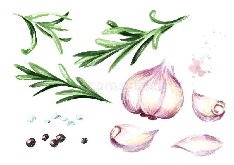 Alecrins, alho, sal, grupo da pimenta Ilustração tirada mão da aquarela, isolada no fundo branco ilustração do vetor