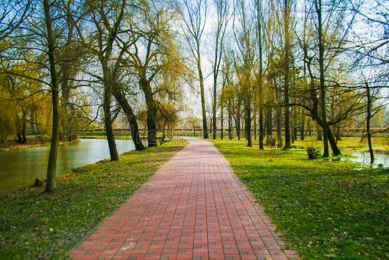 Aleey w parku obraz royalty free