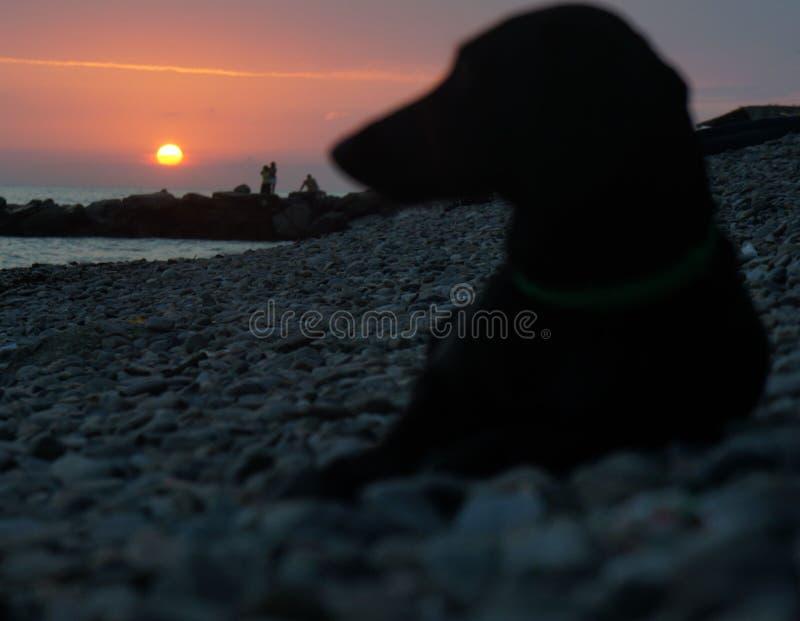 Alegría del perro en la puesta del sol imagenes de archivo
