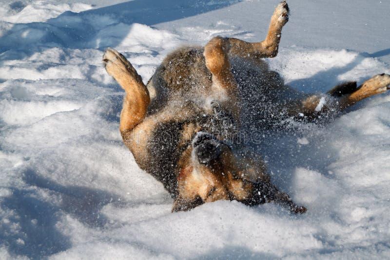 Alegria do cão fotografia de stock royalty free