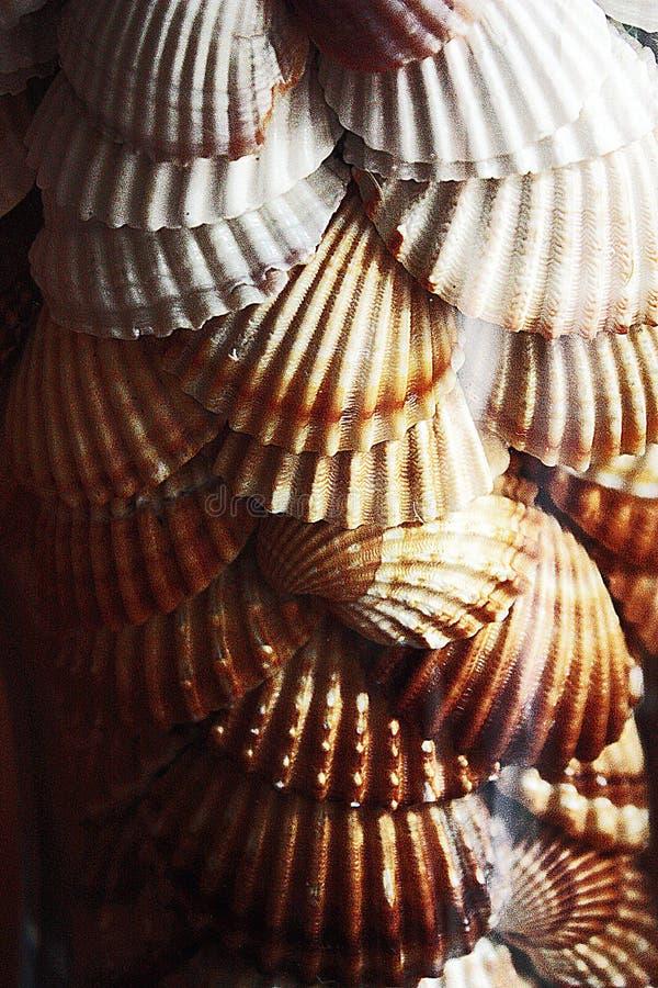 Alegrias do oceano foto de stock royalty free