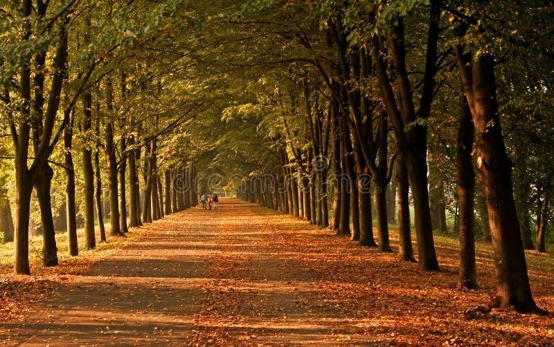 alei jesień zdjęcia stock