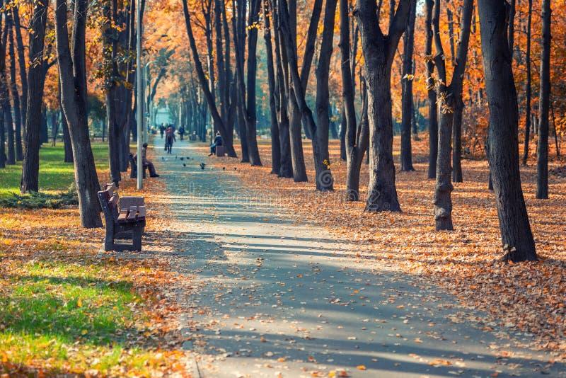 Aleia adiantada cênico bonita do outono com os bancos entre árvores e a luxúria colorida dourada da folha no parque da cidade Tra imagem de stock