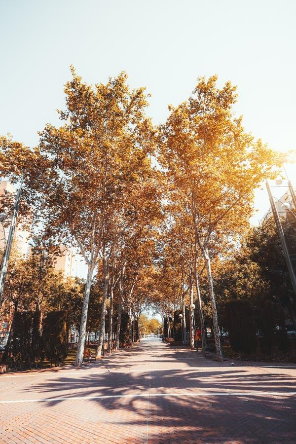 Aleia com árvores altas, pavimento da queda foto de stock royalty free