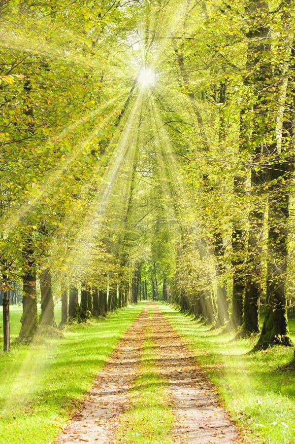 Aleia da árvore com raios brilhantes do sol imagens de stock